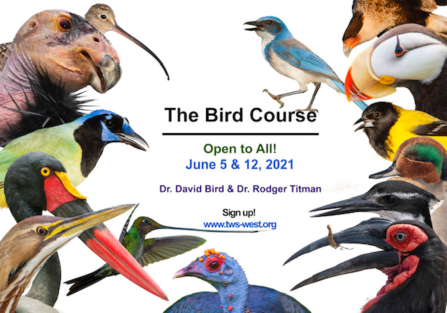 The Bird Course